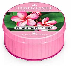 Düfte, Parfümerie und Kosmetik Duftkerze Blooming Plumeria - Kringle Candle Blooming Plumeria